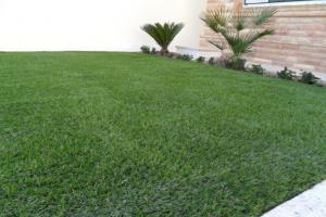 Vente de gazon synthtique pour jardin tunisie for Jardin 2000 tunisie