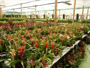 Vente de plante ornementales tunisie for Vente plantes artificielles tunisie