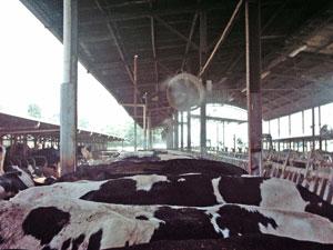 Brumisateur pour elevage bovin