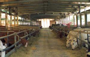 Brumisateur pour l'élevage bovin