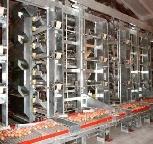 Cages équipements avicole et cunicole