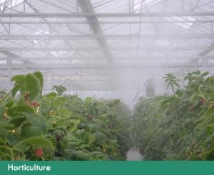 Brumisation dans l'horticulture