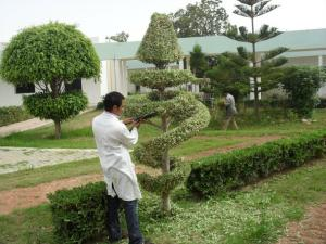 Entretien des espaces verts tunisie for Entretien des espaces verts